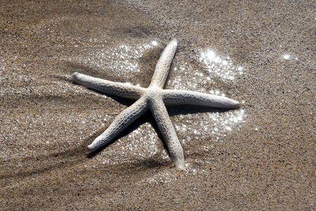 Starfish riposo sulla spiaggia di sabbia nella luce del pomeriggio.