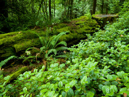 Green forest floor