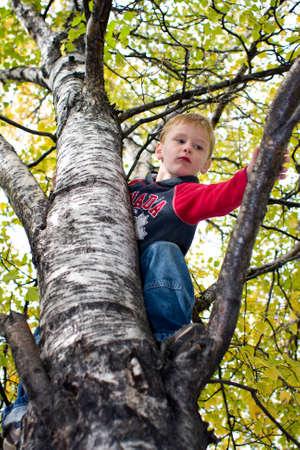 Boy climbing tree Banco de Imagens