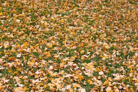 Fall leaves to rake up Reklamní fotografie