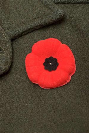 remembrance day poppy: Poppy