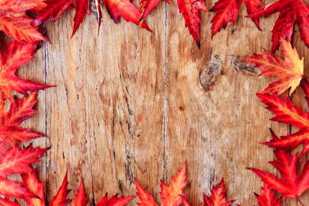 Autumn leaf border Stock Photo - 10869761