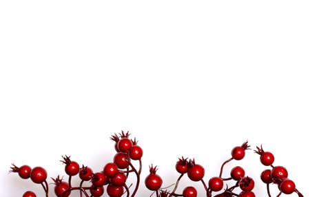 berry: Christmas border