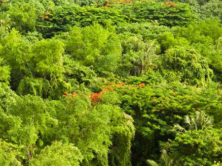 Lush foliage Stock Photo