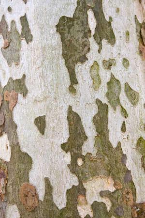 Natural camoflage