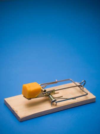 치즈와 쥐덫 스톡 콘텐츠