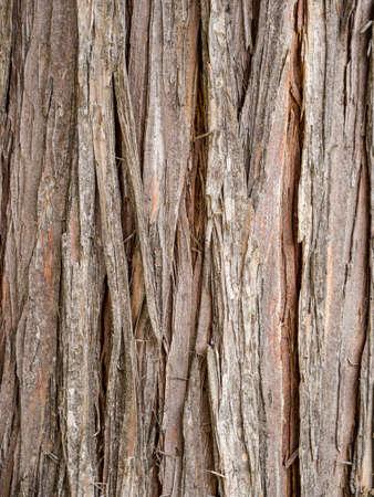 cedro: Cedar corteza