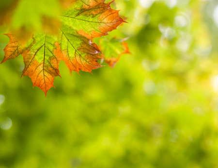 Fall autumn background photo