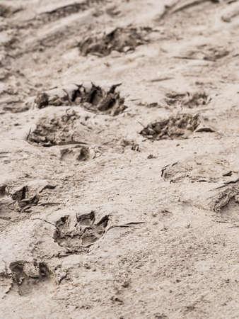 animal tracks: Animal brani Archivio Fotografico