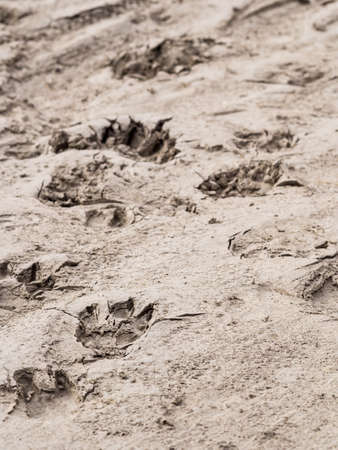 Animal tracks Stock Photo - 15703026