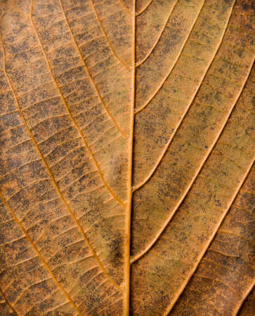 grunge textures: Abstract leaf texture Stock Photo