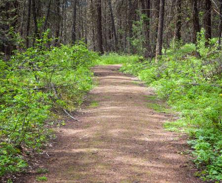 自然ハイキング コース