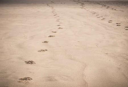 Footprints in sand on beach Stock Photo - 21448484