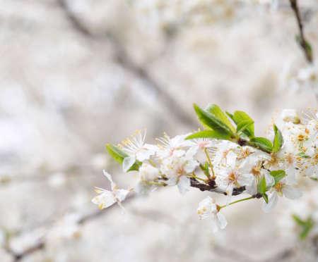 Spring blossoms Imagens