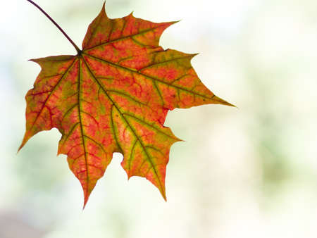 copy space: Autumn leaf with copy space Stock Photo