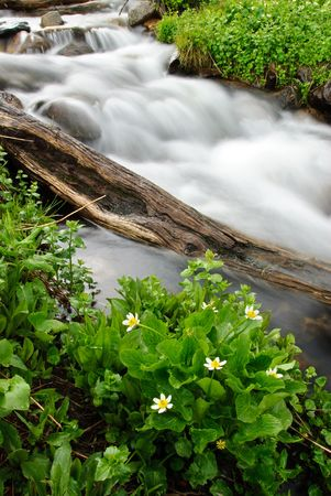 A small alpine stream and flowers in the spring.