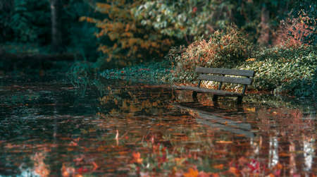 Lonely Bench In Puddle; Fall Daytime