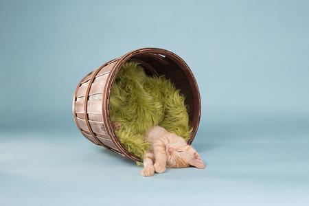 Orange Tabby Kitten in Basket Foto de archivo