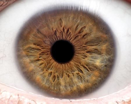 Macro photo of human eye, iris, pupil, eye lashes, eye lids. Banque d'images