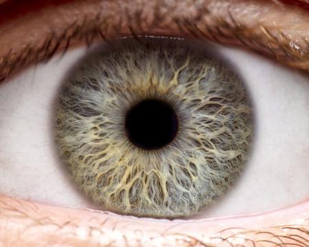 Macro photo of human eye, iris, pupil, eye lashes, eye lids. Foto de archivo
