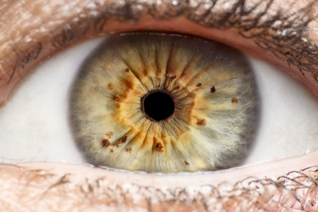 Macro photo of human eye, iris, pupil, eye lashes, eye lids. Stock Photo