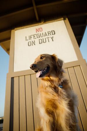 Hond op het strand op badmeestertoren Stockfoto