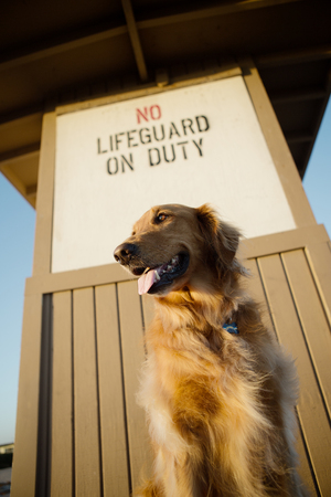 Dog at the Beach on Lifeguard Tower