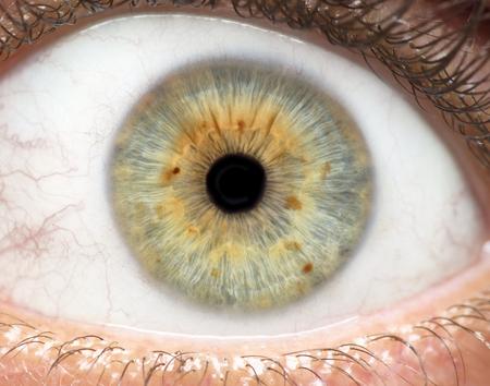 인간의 눈, 홍채, 동공, 눈썹, 눈 뚜껑의 매크로 사진.