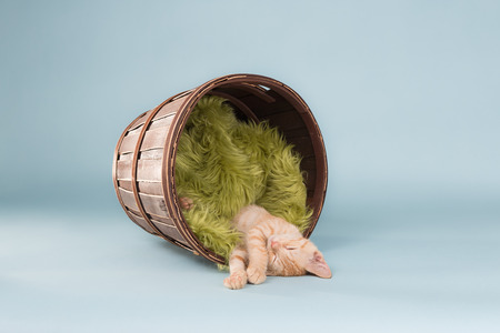 Orange Tabby asleep in a bucket with a blanket