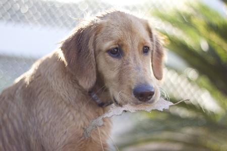 Puppy met een blad Stockfoto