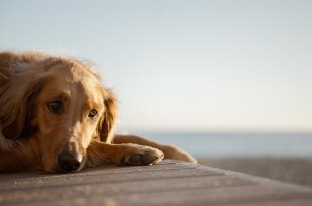 Hond op het strand rusten Stockfoto