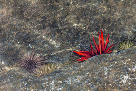 Picture of Tidal Pool and Sea Urchins