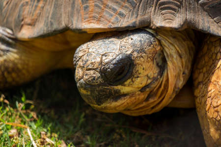 radiated: A Close Up of a Radiated Tortoise