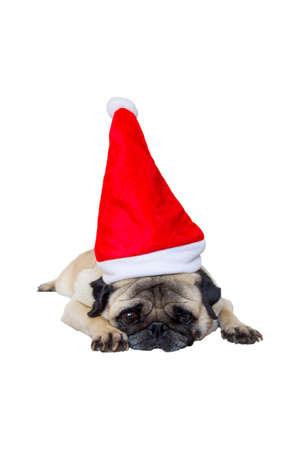 Sad Beige Pug Wearing Christmas Hat Stock Photo - 23480117