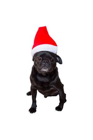 black pug: Sad Looking Black Pug Wearing Christmas Hat