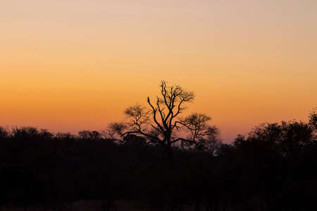 Tree silhouetted against a colorful orange sky Stock Photo