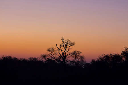 Tree silhouetted against a colorful orange and purple sky