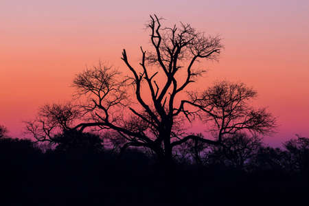 Tree silhouetted against a colorful purple sky