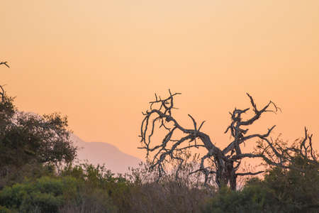 Orange sunset with a dead tree in the foreground
