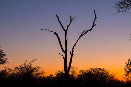 Dead tree silhouetted against a colorful blue and orange sky Stock Photo