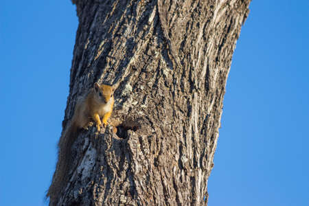 Tree squirrel in a tree against a blue sky