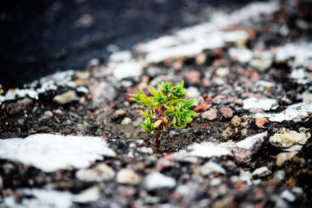 A plant grows out of the blacktop
