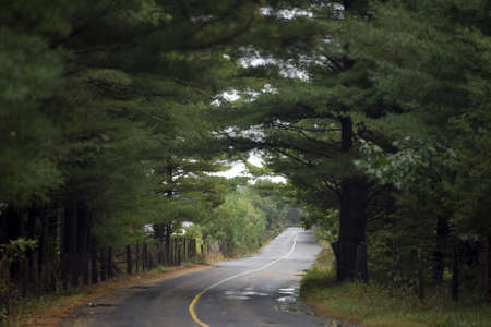 A meandering country road goes through fields and forests on a damp, rainy day photo
