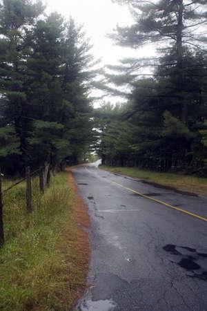 damp: Una strada di campagna serpeggiante attraversa campi e boschi su un panno umido, giorno di pioggia