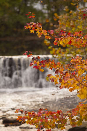 The reds and yellows of autumn leaves mix in a mild breeze in front of a small waterfall close to dusk