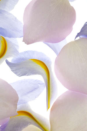 Abstract compotion of iris and rose petals Stock Photo