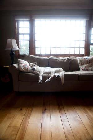 De hond maakt zich zeer comfortabel op de bank in de woonkamer Stockfoto