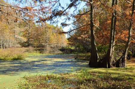 Autumn in the Bayou Stock Photo - 5049980
