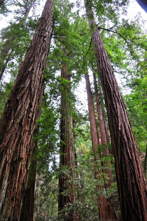 Humbled by the size of the Mighty Redwood