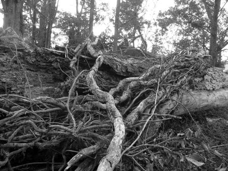 A Casualty of Hurricane Gustav 版權商用圖片